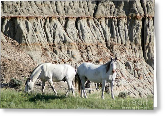 Two Wild White Stallions Greeting Card by Sabrina L Ryan