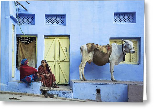 Cattle Run Greeting Cards - Two Women And A Cow Sitting Outside Of Greeting Card by Alan Williams