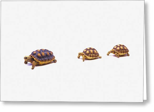 Wood Turtle Greeting Cards - Two Young Red-legged Turtles Following Greeting Card by Thomas Kitchin & Victoria Hurst