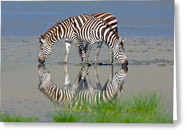 Two Animals Greeting Cards - Two Zebras Drinking Water From A Lake Greeting Card by Panoramic Images