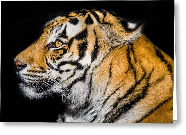 The Tiger Greeting Cards - Tyger Tyger Greeting Card by Greg Nyquist