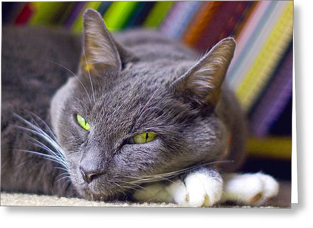 Here Kitty Greeting Cards - Tyla Greeting Card by Joseph C Hinson Photography