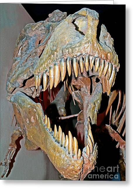 Tyrant Greeting Cards - Tyrannosaurus Rex Skeleton Greeting Card by Millard H. Sharp