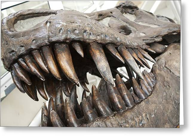 Incisors Greeting Cards - Tyrannosaurus Rex skull Greeting Card by Science Photo Library