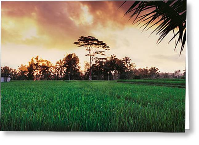 Rice Paddy Greeting Cards - Ubud Rice Fields Greeting Card by Rod McLean