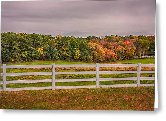 Uconn Greeting Cards - UCONN Autumn Horse Pasture Greeting Card by Steve Pfaffle