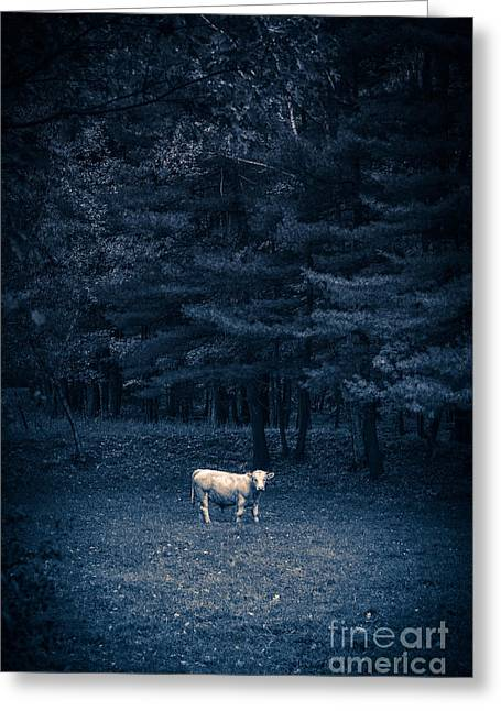 Sacred Photographs Greeting Cards - Udder the Moo Night Greeting Card by Edward Fielding