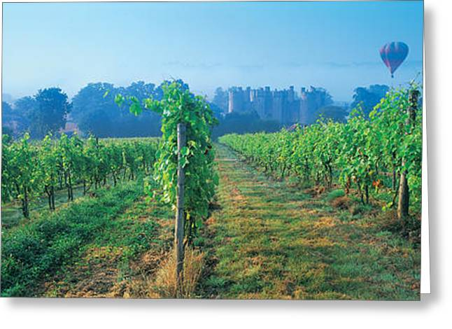 Blue Grapes Greeting Cards - Uk, Great Britain, Sussex, Vineyard Greeting Card by Panoramic Images
