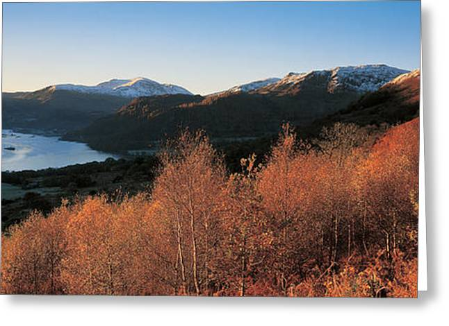 Trees In Snow Greeting Cards - Ullswater Lake District England Greeting Card by Panoramic Images