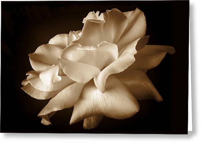 Monochromatic Greeting Cards - Umber Rose Floral Petals Greeting Card by Jennie Marie Schell