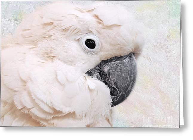 Umbrella Cockatoo Greeting Card by Jai Johnson