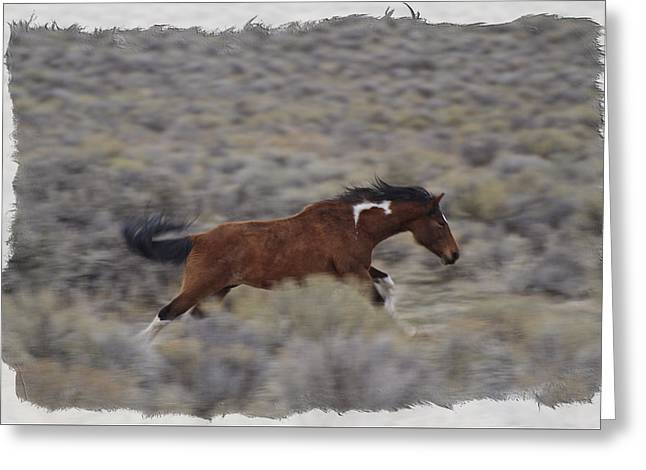 Forelock Photographs Greeting Cards - Unbridled Power D0193 Greeting Card by Wes and Dotty Weber