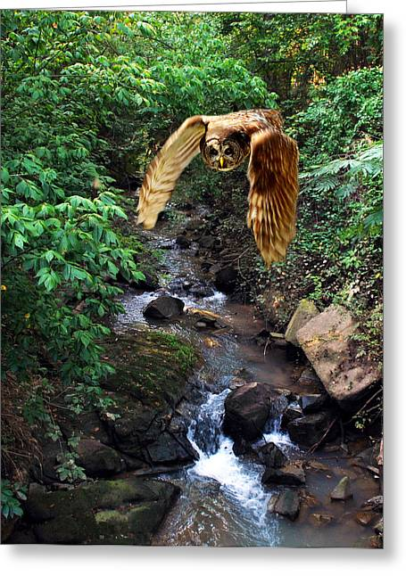 Photos Of Birds Greeting Cards - Uncle Julius Greeting Card by Skip Willits