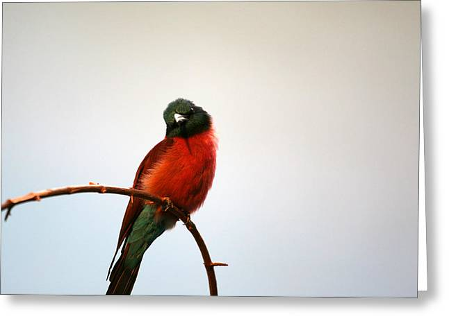Birds On A Branch Greeting Cards - Undecided Greeting Card by Karol  Livote