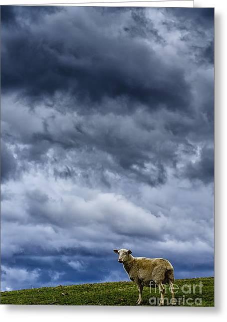 Under A Leaden Sky Greeting Card by Thomas R Fletcher