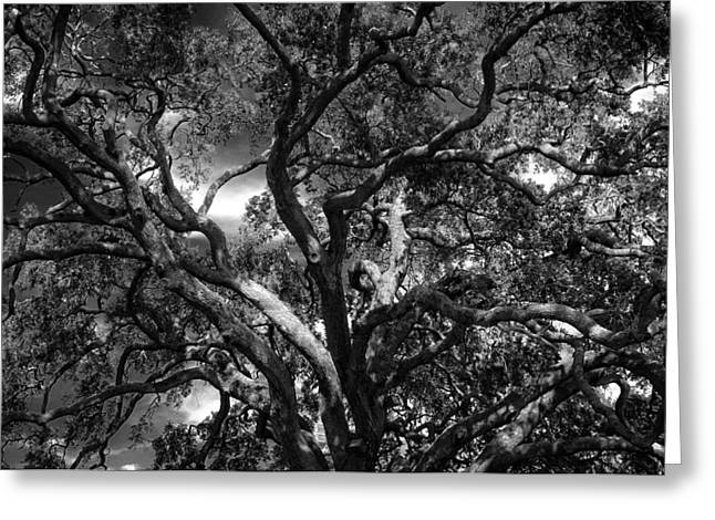 Tree Limbs Greeting Cards - Under A Tree in Black and White Greeting Card by Chrystal Mimbs