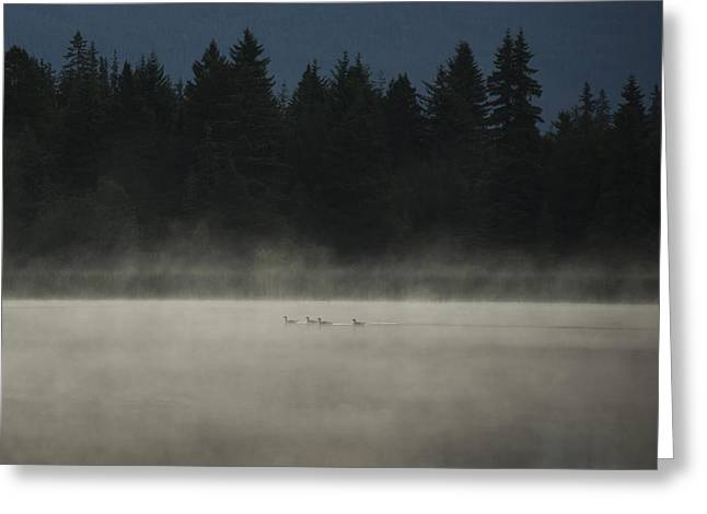 Geese Silhouette Greeting Cards - Under Cover Greeting Card by Aaron S Bedell