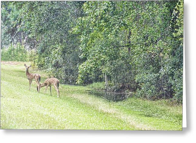 Soft Light Greeting Cards - Under Soft Summer Light Greeting Card by Jan Amiss Photography