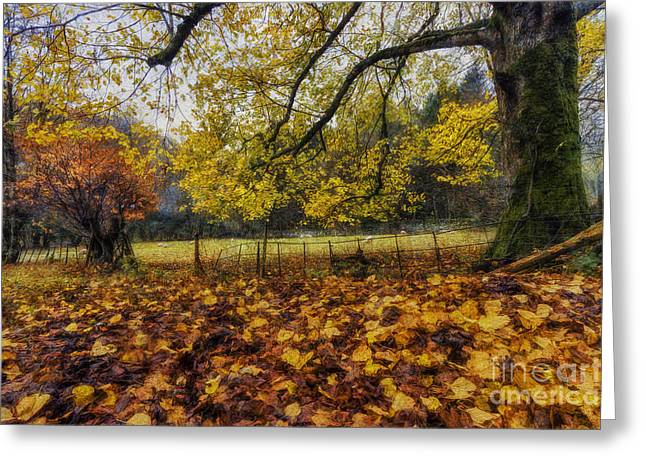 Nature Scene Digital Art Greeting Cards - Under The Autumn Trees Greeting Card by Ian Mitchell