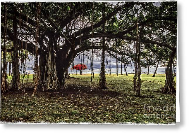Under The Banyan Tree Greeting Card by Mitch Shindelbower
