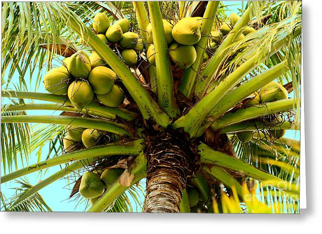 Under The Coconut Tree Greeting Card by Cheryl Young