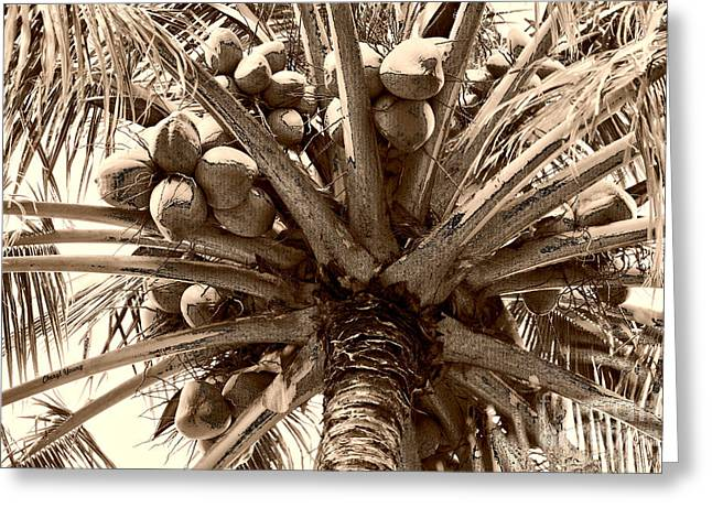 Significance Greeting Cards - Under The Coconut Tree Sepia Greeting Card by Cheryl Young