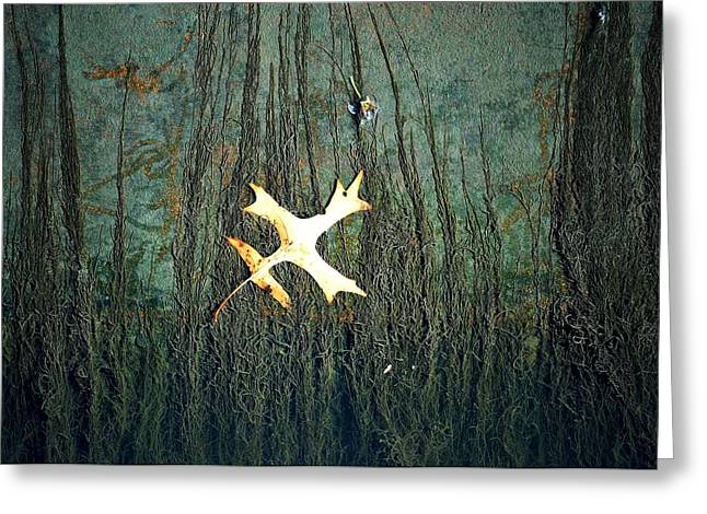 Under The Current Greeting Card by Lisa Plymell