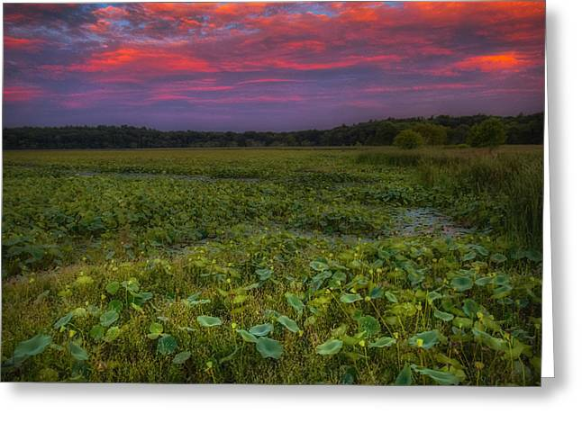Concord Greeting Cards - Under the Dark Cover of Summer Greeting Card by Sylvia J Zarco