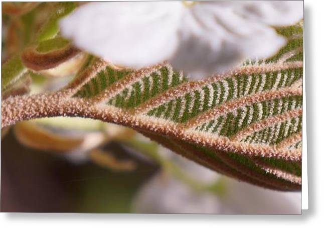Maine Spring Greeting Cards - Under the Flowers Greeting Card by Dawn Hagar