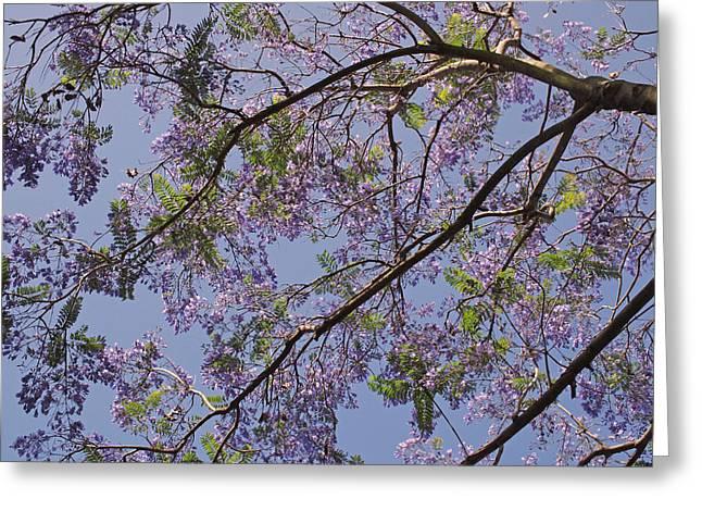 Under the Jacaranda Tree Greeting Card by Rona Black