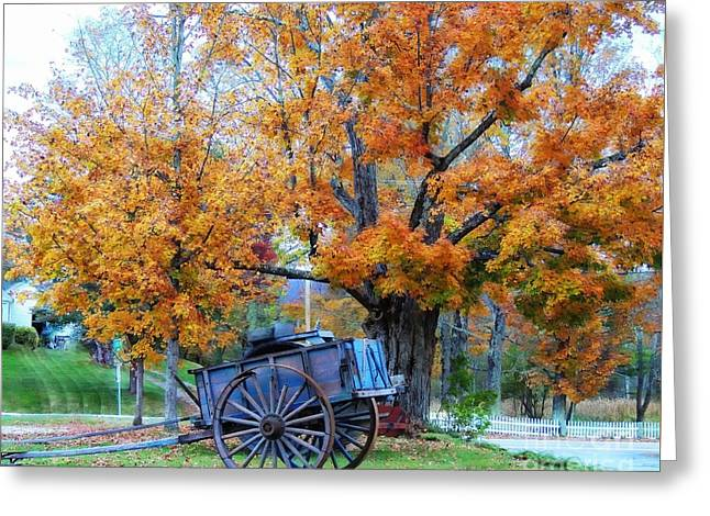Marcia Lee Jones Greeting Cards - Under The Maple Tree Greeting Card by Marcia Lee Jones