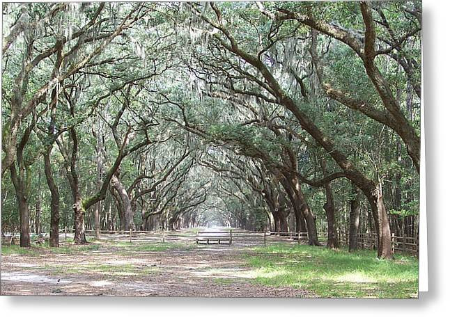 Historic Site Greeting Cards - Under the Oaks at Wormsloe Greeting Card by Jamie Anderson
