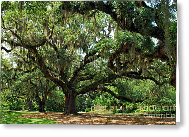 Under The Oaks Greeting Card by Bob Sample
