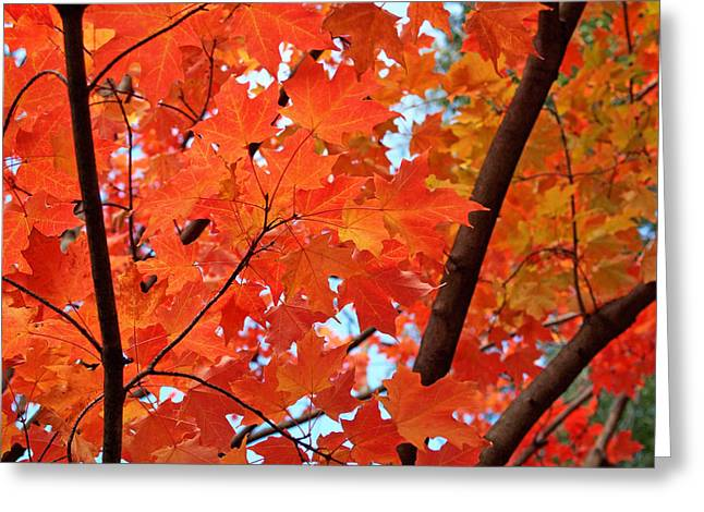 Orange Leaves Greeting Cards - Under the Orange Maple Tree Greeting Card by Rona Black