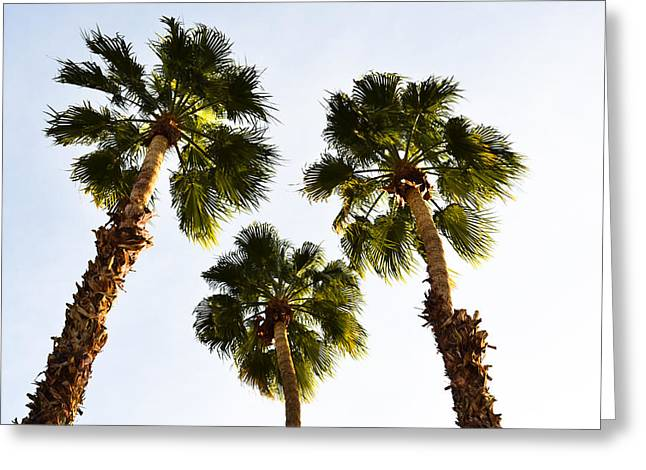 Upshot Greeting Cards - Under The Palms Greeting Card by Ross Jamison