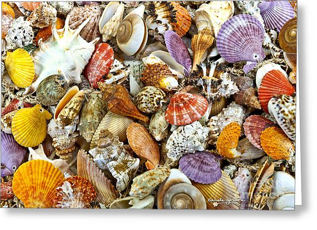 Shell Digital Greeting Cards - Under the Sea Greeting Card by Carole Gordon