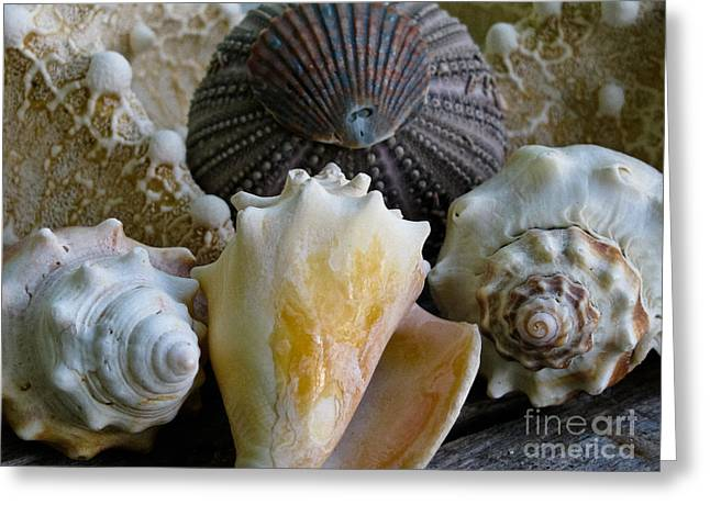 Conch Greeting Cards - Under the Sea Greeting Card by Colleen Kammerer