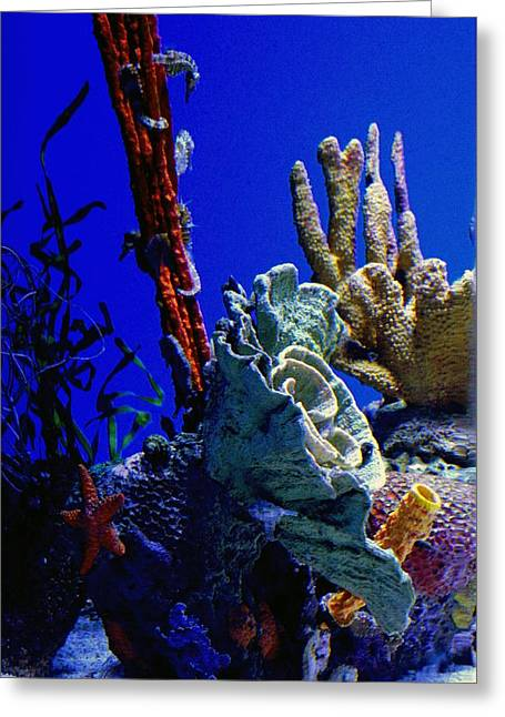 Snorkel Greeting Cards - Under The Sea Greeting Card by Laurie Perry