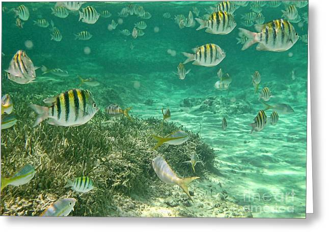 Under The Sea Greeting Card by Peggy Hughes