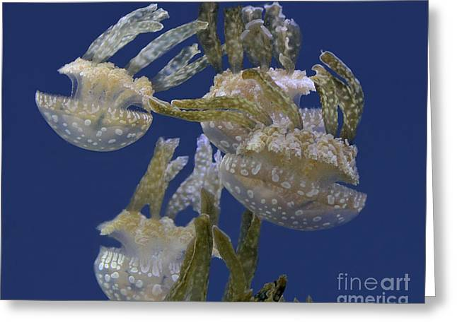 Jelly Fish Greeting Cards - Under The Sea Greeting Card by TN Fairey