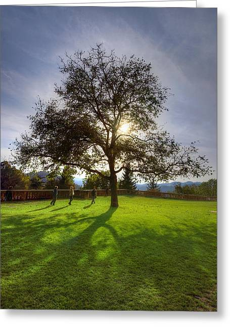 Green Day Greeting Cards - Under the sunlit tree Greeting Card by Ivan Slosar
