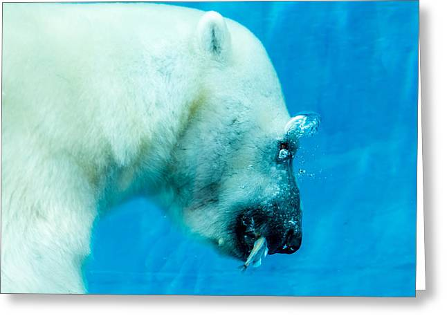 Underwater Polar Bear Greeting Card by Aaron Legarsky