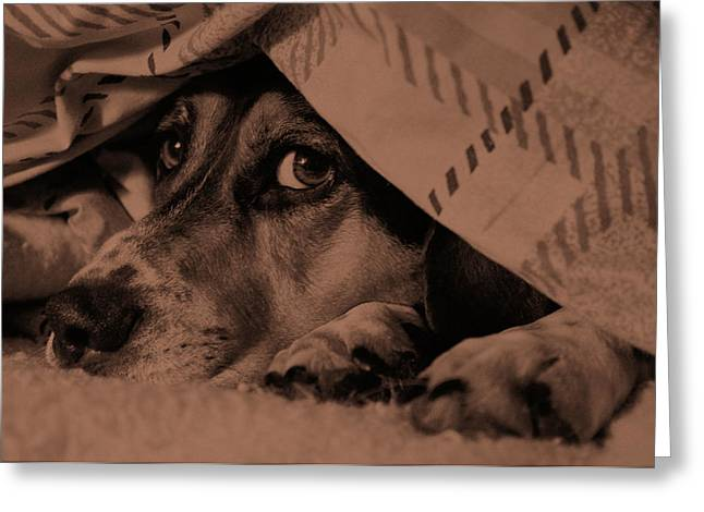 Undercover Hound Greeting Card by Paul Wash