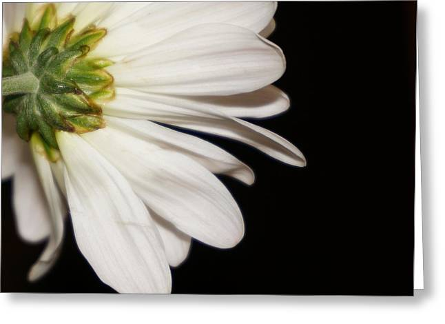 Flowers With Back Ground Greeting Cards - Underneath a Gerber Daisy Greeting Card by Laurie Pike