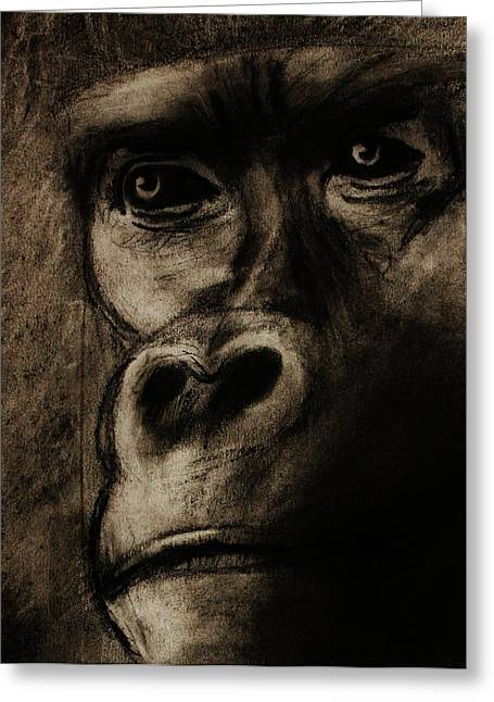 Gorilla Drawings Greeting Cards - Understanding Greeting Card by Michael Cross