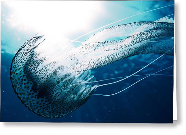 Underwater Diva Pyrography Greeting Cards - Underwater 13 - A beautiful jellyfish in backlight Greeting Card by Markus Stepel