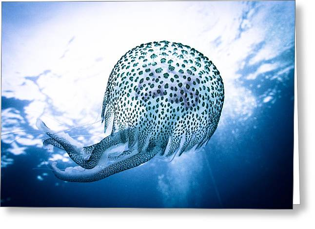 Underwater Diva Pyrography Greeting Cards - Underwater 14 - A beautiful jellyfish in backlight Greeting Card by Markus Stepel