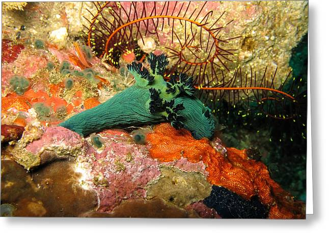 Scuba Diving Pyrography Greeting Cards - Underwater 2 - Nudibranch at Philippines Islands Greeting Card by Markus Stepel