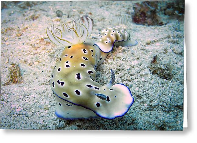Scuba Diving Pyrography Greeting Cards - Underwater 4 - Two nudibranchs joined for love Greeting Card by Markus Stepel