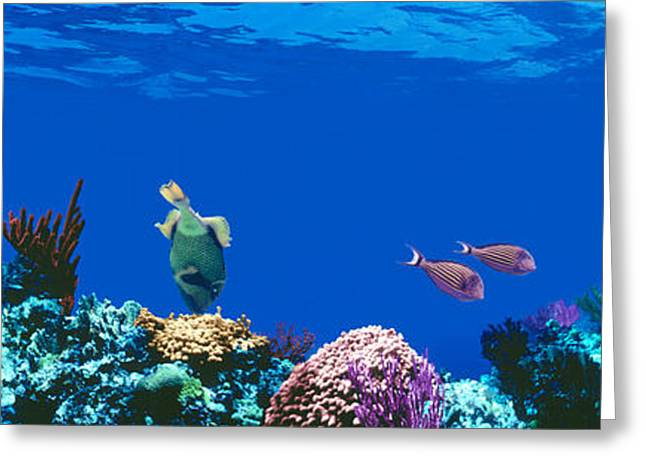 Biology Greeting Cards - Underwater, Caribbean Sea Greeting Card by Panoramic Images
